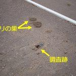 地盤調査跡